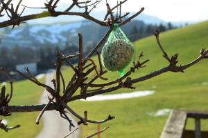 20160130-1606-Alpenrose 57