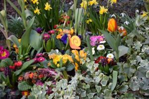 Frühlingsblumen 1