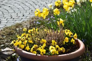 Frühlingsblumen 2
