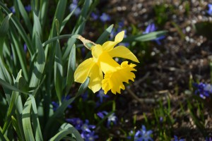 Frühlingsblumen 3