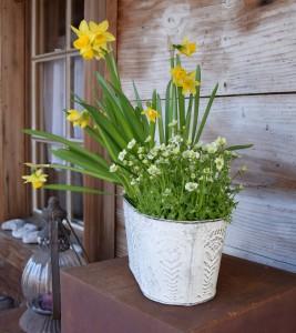 Frühlingsblumen 7