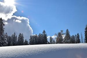 Toggenburg Winter 47