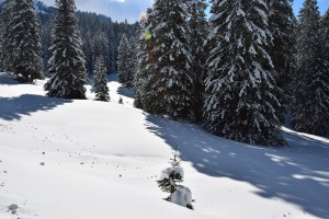 Toggenburg Winter 67