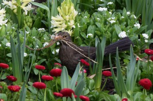 Nestbau Vogel