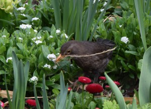 Nestbau Vogel2
