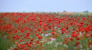 2 Blumenwiesen