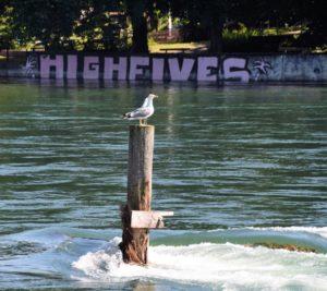 Am Rhein nach Neuhausen