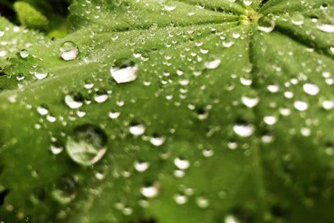 Glücksgefühl im Regen